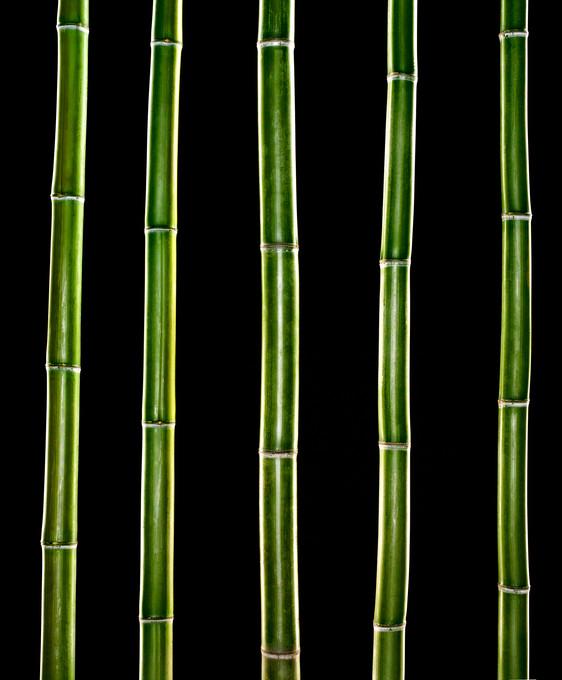 white_bamboo-plates_0023v1.jpg