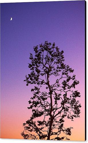 Malibu Dawn