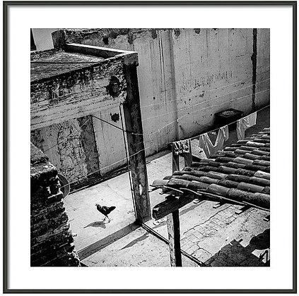 Chicken In The Yard Framed