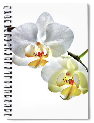 Orchids On White Notebook