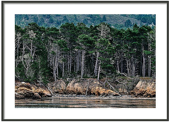 Still Waters At Point Lobos Framed