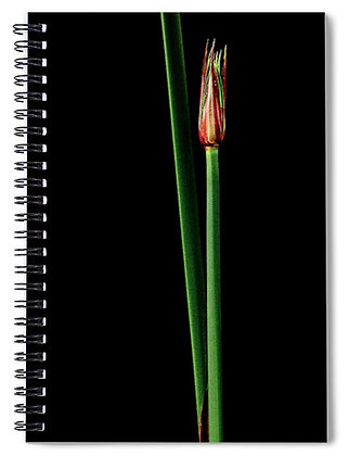 Simple Reed Notebook