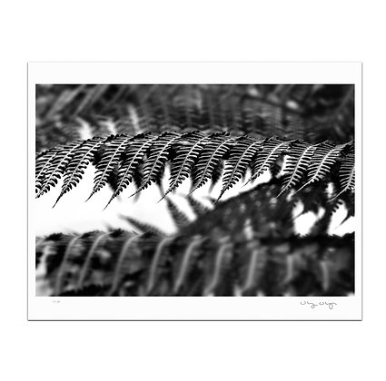 Fern Print