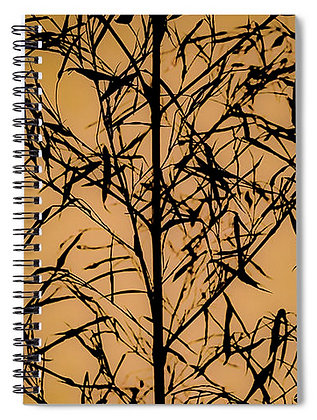 Dawn In The Forest Notebook