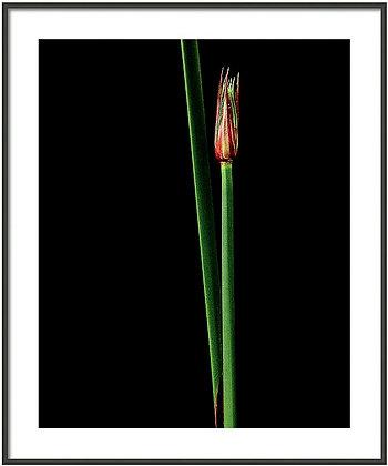 Simple Reed Framed