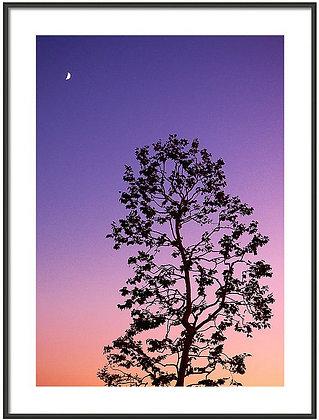 Moonrise At Dusk Framed