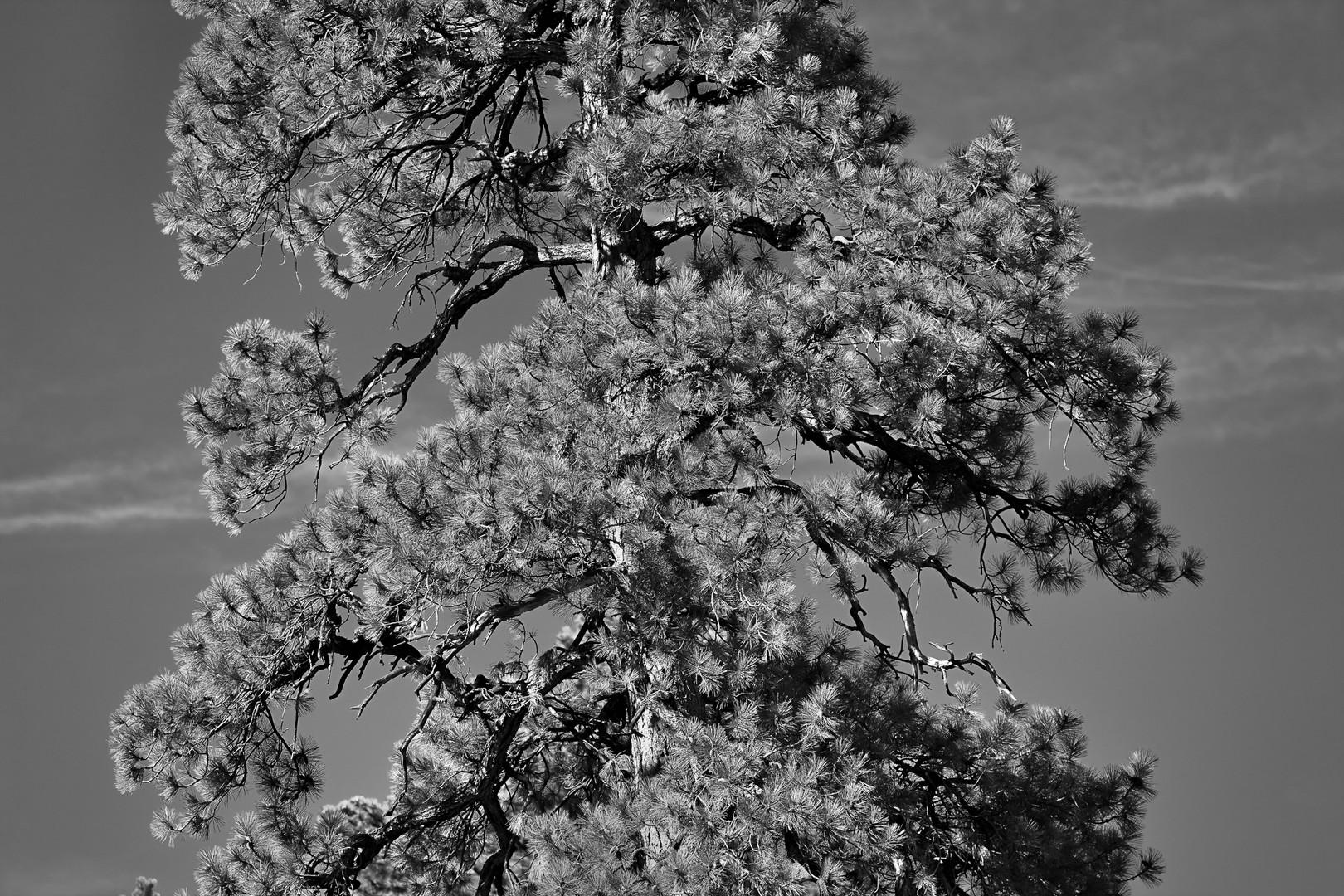 cactus flower1057-Edit.jpg