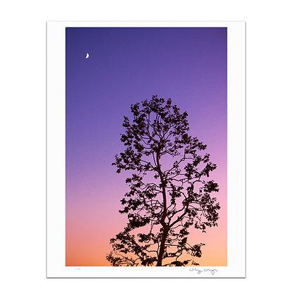 Moon Rise At Dusk Print