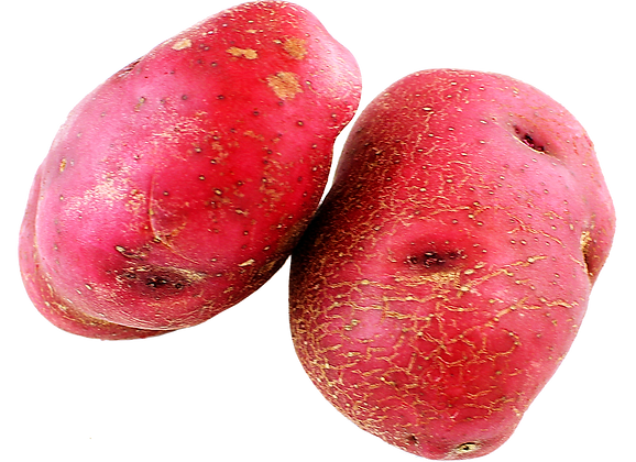 POTATO [ RED ]