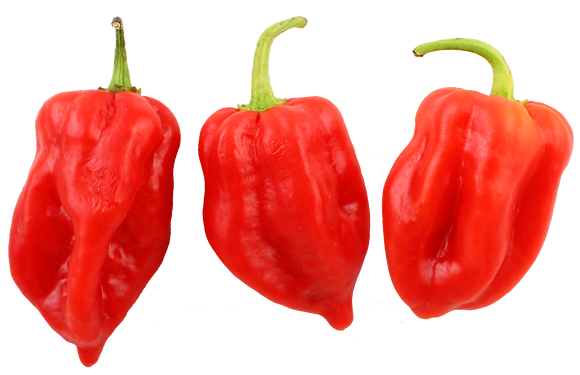 HABANEROS RED PEPPER
