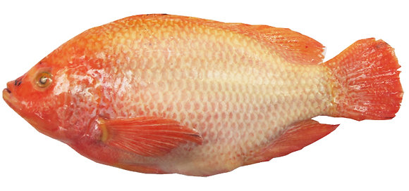 CLEANED RED TILAPIA
