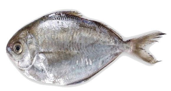 BUTTER FISH (LOOSE-IQF)