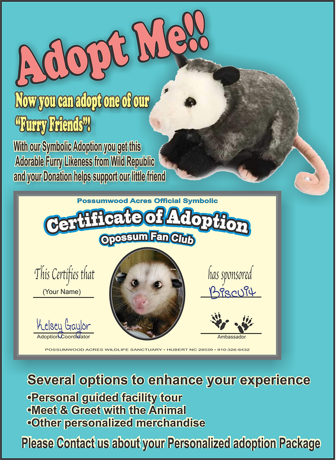 adoption_Slick2.png