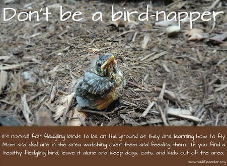 bird-napper.jpg