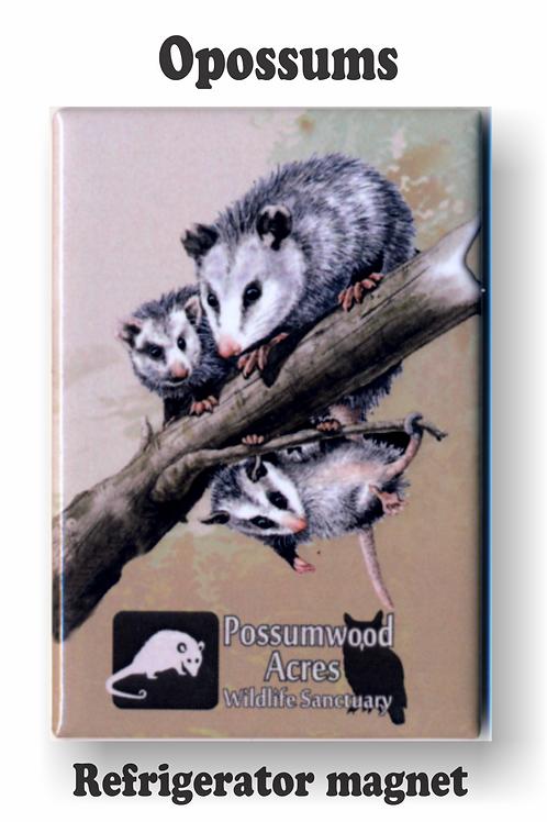 Opossum Family Magnet