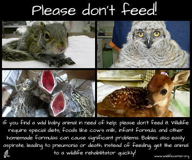 Don'tFeed.png