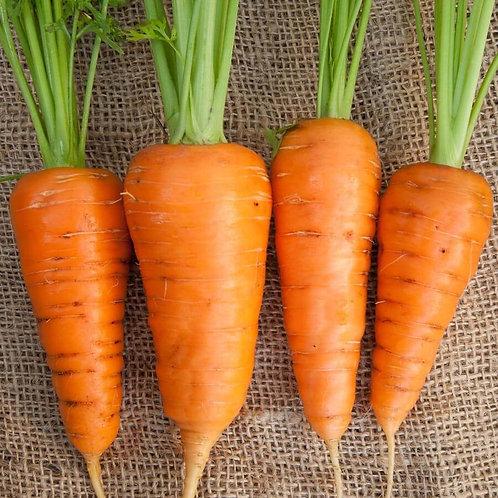 Kuroda Nova Carrots (Super Sweet!)