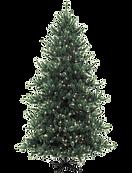 Tannenbaum 2