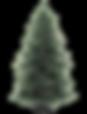 Christmas Pine Tree 2