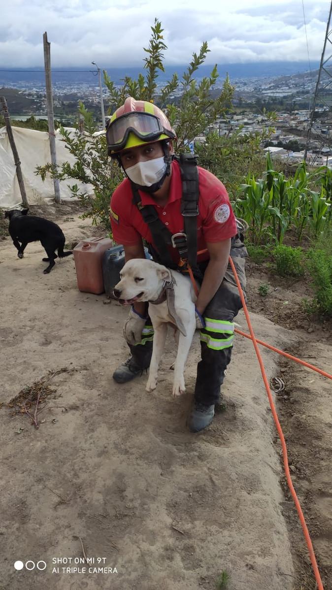 Perro que cayó a una quebrada fue rescatado