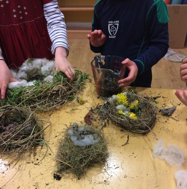 Spring: nest building