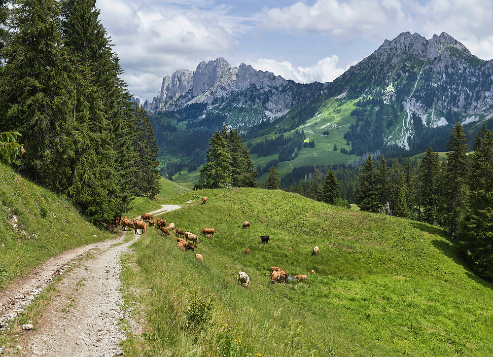 """<span>Photo by <a href=""""https://unsplash.com/@xavier_von_erlach?utm_source=unsplash&amp;utm_medium=referral&amp;utm_content=creditCopyText"""">Xavier von Erlach</a> on <a href=""""https://unsplash.com/collections/2307091/swiss-mountains?utm_source=unsplash&amp;utm_medium=referral&amp;utm_content=creditCopyText"""">Unsplash</a></span>"""