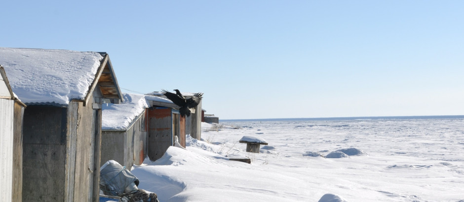 Zone Arctique : 23 janvier 2020