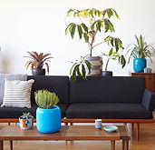 houseplants-apartment-zenaida-sengo_1450