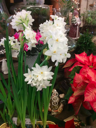 Bulb Planting Basics