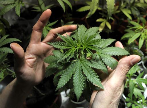 Regulación del Cannabis de uso adulto