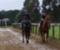 A couple of youngsters are taken through their paces at |Julien Welsh's training centre at Pakenham South _ Booralite Park