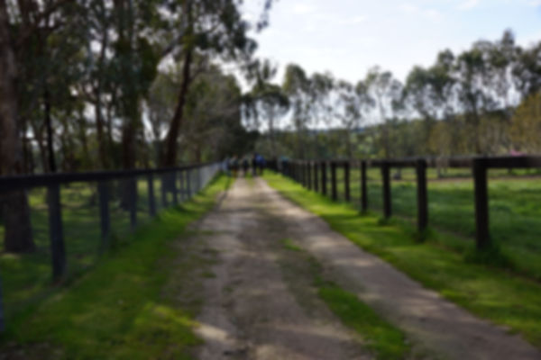 Booralite Park at Swanpool is also a government registered quarantine centre for horses heading overseas