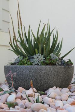 feature pot
