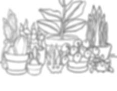 179_PlantLife_Illustration.JPG