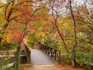 Bridge in Beauty