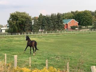 Pony is camera shy