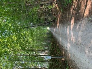 G2G through the woods