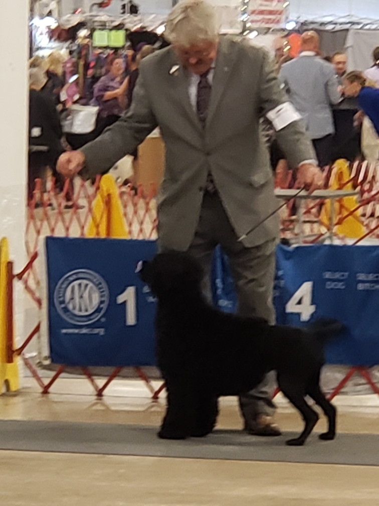 Maxie handled by CJ Farve Canine Specialists