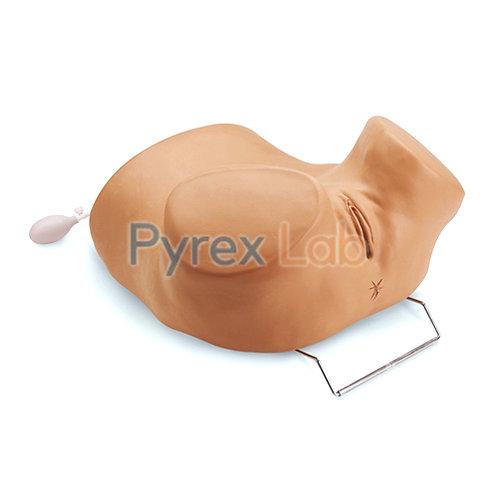 Gynecological Examination Model