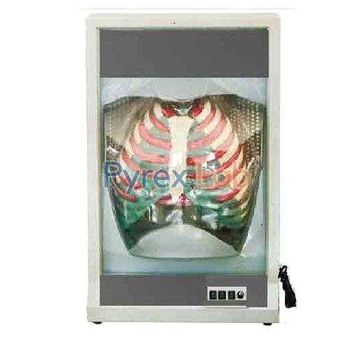 Functional Human Respiration Model