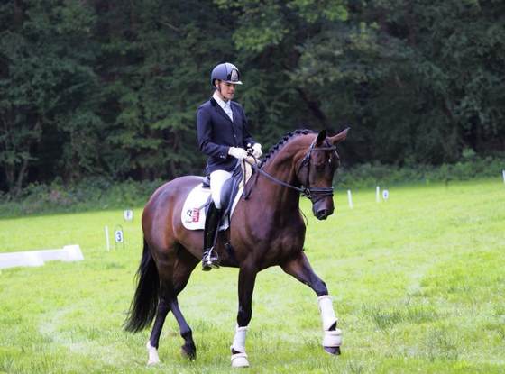 Young horses placed at Frederiksnoord!