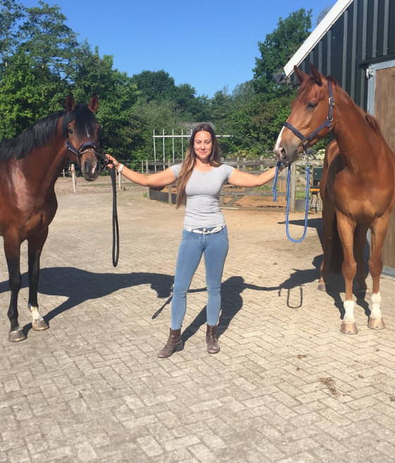 Two horses sold to South Africa!