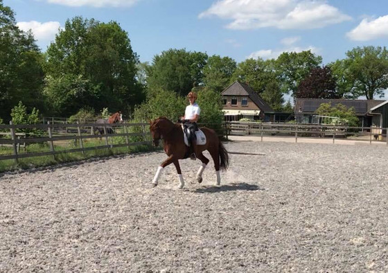 For Sale - Z Level Zhivago mare