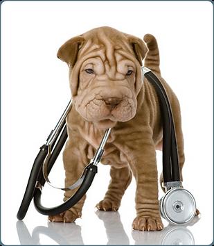 cachorro carregand estetoscópio