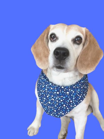 Polka Dog Blues