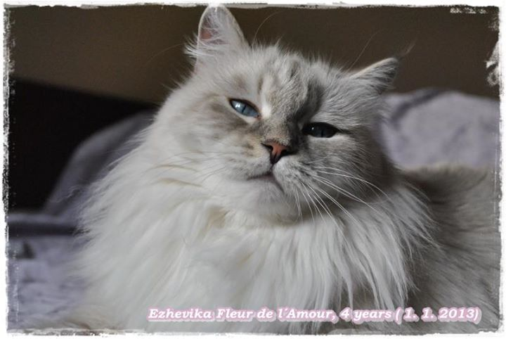 Ezhevika Fleur de l´Amour, RU