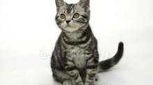 【子猫入舎情報】