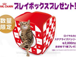 【猫ちゃんプレイボックスプレゼント】