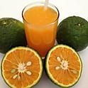 D3. Fresh Squeezed Orange Juice - CAM VẮT