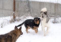 Adopterun chien roumain